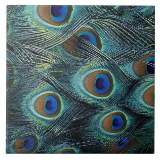 Modelo en las plumas masculinas del pavo real azulejo cuadrado grande