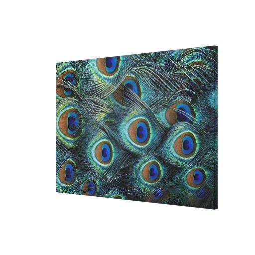 Modelo en las plumas masculinas del pavo real impresiones en lona estiradas