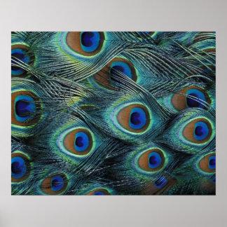 Modelo en las plumas masculinas del pavo real impresiones