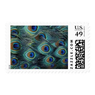 Modelo en las plumas masculinas del pavo real sellos