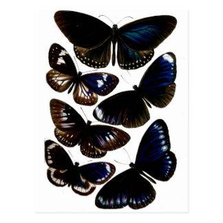 Modelo hermoso de la imagen de las mariposas del postales
