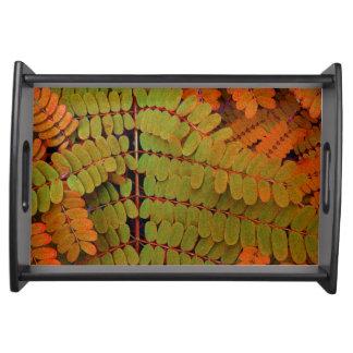 Modelo minúsculo de las hojas bandejas