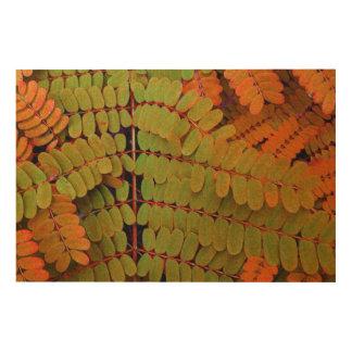 Modelo minúsculo de las hojas cuadros de madera