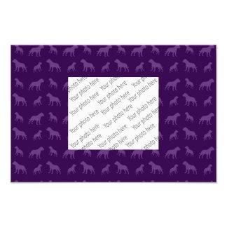 Modelo púrpura del dogo impresion fotografica