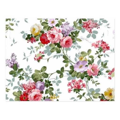 Modelo rosado femenino elegante de los rosas del v postal