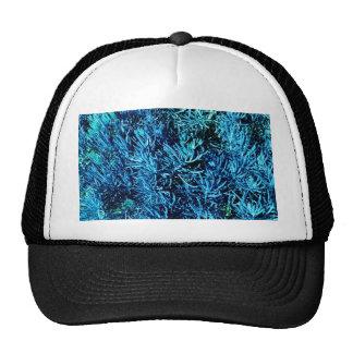 modelo suculento total del azul del extracto de lo gorras de camionero