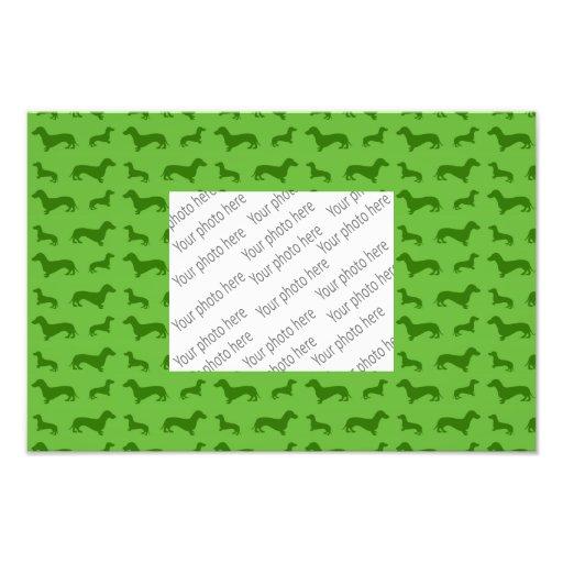 Modelo verde claro lindo del dachshund fotografias