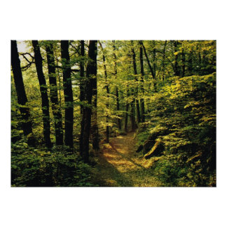Modelos de la luz en el bosque poster