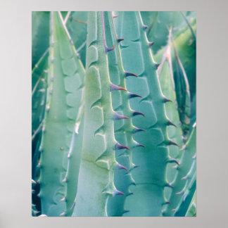 Modelos de una planta del agavo póster