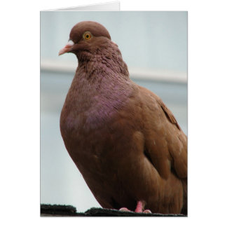 Modena Pigeon named Big Red Card