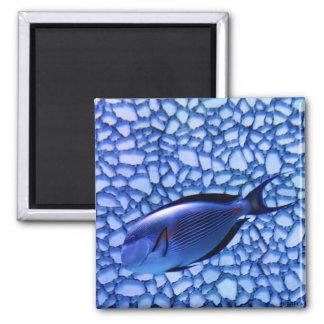 Modern Aquarium 2 Inch Square Magnet