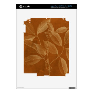 Modern Botany VI iPad 3 Decal