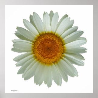Modern Cool Floral Pop Art White Daisy on White Poster
