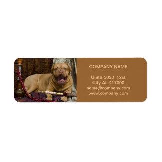 Modern cute animals pet service beauty salon label