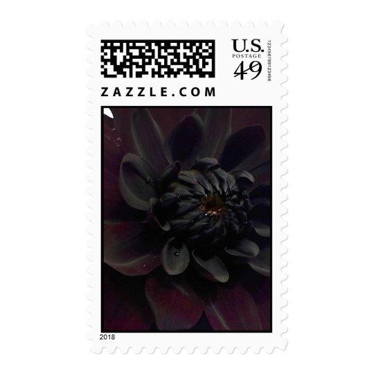 Modern Floral Black Dahlia Flower Postage