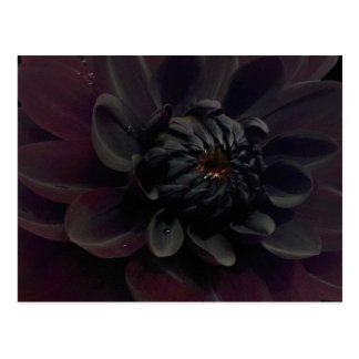Modern Floral Black Dahlia Flower Postcard