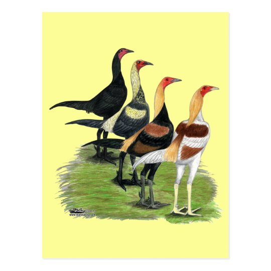 Modern Game Roosters Postcard