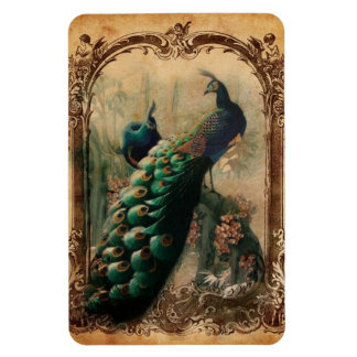 modern girly vintage peacock fashion rectangular photo magnet