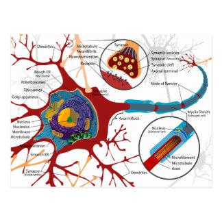 Modern Neurons Style Postcard