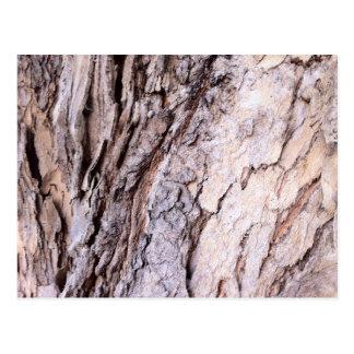 Modern Red Gumtree bark design Post Card