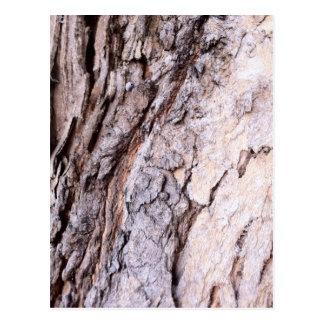 Modern Red Gumtree bark design Postcards