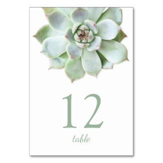 Modern Succulent Wedding Table Number