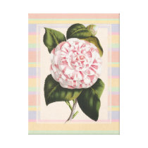Modern Vintage Camellia Pretty Pink and White Canvas Print