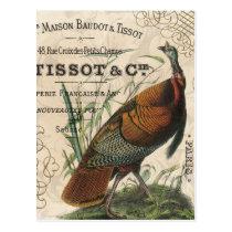 modern vintage fall wild turkey postcard
