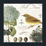 "modern vintage French bird and nest Canvas Print<br><div class=""desc"">modern vintage French bird and nest</div>"