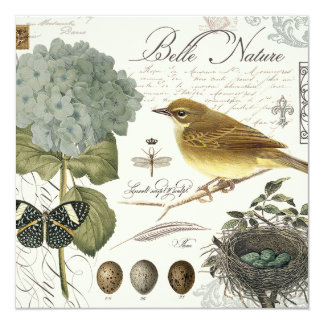 modern vintage French bird and nest Card