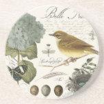 modern vintage French bird and nest Coaster