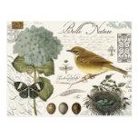 modern vintage French bird and nest Postcard