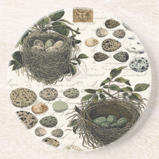 Modern Vintage French bird nests and eggs Drink Coaster