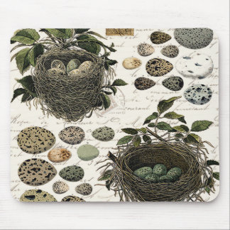 Modern Vintage French bird nests and eggs Mouse Pad