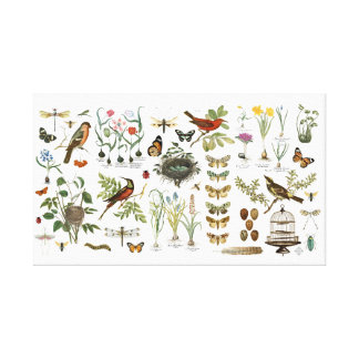 modern vintage french botanical birds and flowers canvas print