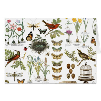 modern vintage french botanical birds and flowers card