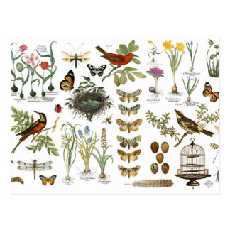 modern vintage french botanical birds and flowers postcard