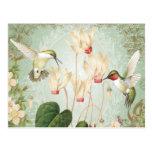 Modern Vintage French Hummingbirds Postcard