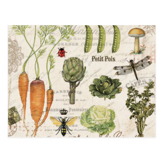 modern vintage french vegetable garden postcard
