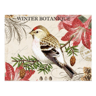 modern vintage french winter bird postcard
