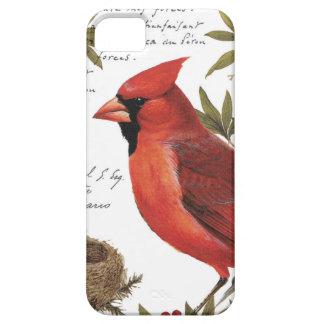 modern vintage winter cardinal iPhone 5 cases