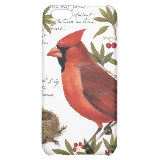 modern vintage winter cardinal cover for iPhone 5C