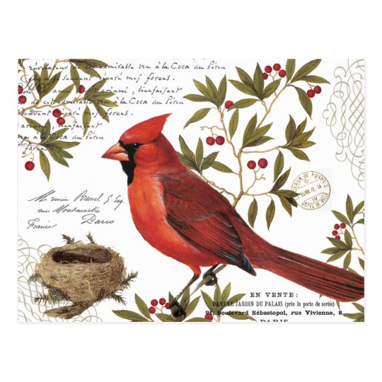 Modern Vintage Winter Cardinal Postcard Zazzle Com
