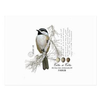 modern vintage winter woodland chickadee postcard