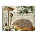 modern vintage woodland hedgehog postcard