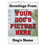 Modificó la foto de su perro para requisitos parti felicitación