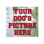 Modificó la foto de su perro para requisitos parti tarjeta postal