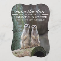 Modify This Funny Meerkats Save The Date
