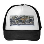 MODIS World Map Hat