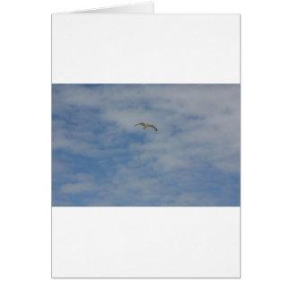 Moewe im Flug Greeting Cards